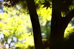 IMG_7063 (NICE COMP & BOKEH) (TehOblivious) Tags: life lighting light sunset sky sun macro green nature leaves closeup clouds canon 50mm leaf bokeh testing f18 technicolor jpeg backlighting 2015 nickhall notraw uselesstags bokehporn cinestyle 700d t5i tehoblivious