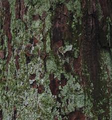 IMG_8858 bark (tonyanthonye) Tags: bark tonyanthony tonyanthonye