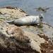 thinking of you (nosha) Tags: ocean california sea usa beach beautiful beauty wildlife pointlobos nosha