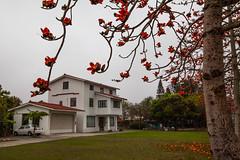 _MG_9834 () Tags: travel flowers trees red plant garden photography bokeh taiwan tunnel sunflower dslr      kapok       formosan numerous     flower  beautiful    canon5d2  farmland