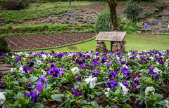 Amor Perfeito (soares.rodrigo@ymail.com) Tags: chuva frias viagem rodrigo inverno frio aline canela soares gramado serragacha