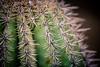 Spines (rg69olds) Tags: 1222016 6d canonef70200mmf28lisiiusm canondigitalcamera nebraska photoclub animal canon canoneos6d henrydoorlyzoo omaha zoo spines cactus plant desertdome indoor
