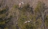 7K8A8982 (rpealit) Tags: scenery wildlife nature new york state bald eagles bird