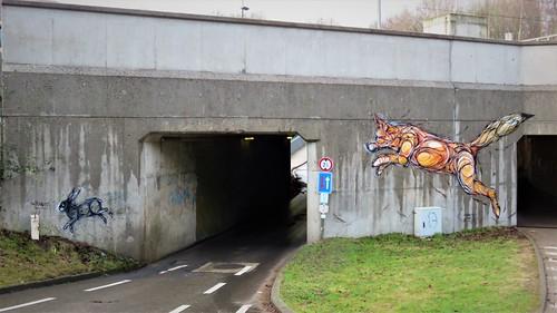 Dzia / Groenendaal - 9 jan 2017