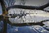 Ice teeth (Galep Iccar) Tags: ghiaccio ice water nature natur blue cold freddo winter inverno polar lake trasimeno
