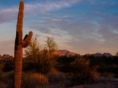 Warm Saguaro and Superstition Mt.jpg (melissaenderle) Tags: mountain desert cactus arizona