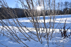 PHO_0187 (Dimi_M) Tags: neige soleil nature foret