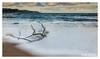 Branching Out (D.K.o.w) Tags: ballycastle antrimcoast branch waves coastal glensofantrim northcoastroad canon7dmkii rathlinisland beach sand seascape landscape wet northernirelandlandscape foam longexposure drift wood sigma1020 wideangle