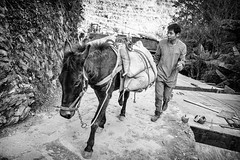Donkey (GavinZ) Tags: animal walking china guilin people bw construction load climb longji 中国 广西