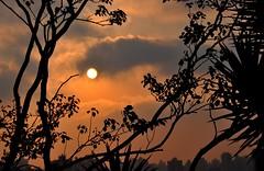 aquecendo a cidade (Ruby Ferreira ®) Tags: branches sunset pôrdosol galhos árvores silhuetas silhouettes cidade prédios city sol sun clouds buildings