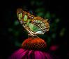 _1212279 (5816OL) Tags: zoos butterflies dad zoo2016