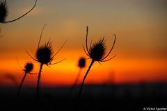Sunset (Viictor B) Tags: sun sunset sunrise sunshine lune moon flower flowers red yellow twilight evening night nature photographie photography canon macro beauty unique