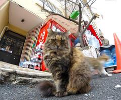 """ne çekiyorsun, ulan?"" (hacky_Am) Tags: cat cats katze strasenkatze sokakkedi hayvan tier strase animal streetcat streuner kedi"