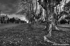Ramón Biaus, Partido de Chivilcoy, Buenos Aires, Argentina (Juan C. Riccelli) Tags: buenosaires argentina ramónbiaus chivilcoy rural pueblo village countryside campo paisaje landscapes old viejo historia history ferrocarril railway railroad nikond7100 blancoynegro blackandwhite bw tree arbol plaza street calle square platano plátanodesombra platanus×hispanica