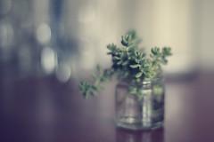 ... (L'hort de la Lolo | Agnès) Tags: 50mm stilllife brot vidre glass green verd home crass succulentplant lhortdelalolo