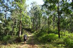 Bushwalking (test Sony-HX90V) (Tatters ) Tags: trees forest landscape australia bushwalking qld sonyhx90v