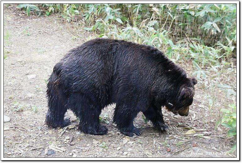 熊牧場 (17)