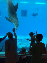 "Paul and Inde See Dolphins at Brookfield Zoo • <a style=""font-size:0.8em;"" href=""http://www.flickr.com/photos/109120354@N07/19810207268/"" target=""_blank"">View on Flickr</a>"