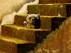 ,, Mamas Toy ,, (Jon in Thailand) Tags: stairs cat toy moss eyes nikon tail innocent ears whiskers greeneyes jungle nikkor d300 decayingbuilding thelittledoglaughed 70300vr