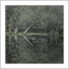 Doubled Over. (muddlemaker1967) Tags: hampshire landscape photography thenewforest national park winter 2017 trees reflections water nikon d700 nikkor 70200 f28