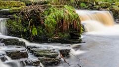 2017-01-17 Rivelin-7416.jpg (Elf Call) Tags: nikon rivelin river yorkshire water stream 18105 sheffield steppingstones waterfall d7200 blurred