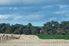 Corn on Woodville JUL_4080.jpg (ImaginingsLifeImages) Tags: maize farm scenes australia home floraandfauna australian rural woodville corn nsw agriculture farmland crops nature flora mays cereals poales zea poaceae newengland armidale northerntablelands places armidaleregion
