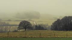 Eifel (Netsrak (on/off)) Tags: forst landschaft natur nebel wald fog forest mist nature woods rheinbach nordrheinwestfalen deutschland de feld field wiese meadow winter january januar tree trees baum bäume
