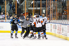 "Missouri Mavericks vs. Wichita Thunder, January 6, 2017, Silverstein Eye Centers Arena, Independence, Missouri.  Photo: John Howe / Howe Creative Photography • <a style=""font-size:0.8em;"" href=""http://www.flickr.com/photos/134016632@N02/32191514606/"" target=""_blank"">View on Flickr</a>"