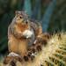 Barrel Cactus Heaven !! (spicysquid1) Tags: