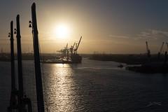Sunrise at the harbour (PauliMatze) Tags: sunrise sonnenaufgang hafen schiff sonne sun harbour hamburg deutschland germany river fluss elbe reflexion reflection kran crane cranes