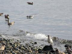 trip to Gibsons.. (iwona_kellie) Tags: gibsons trip chris conor britishcolumbia canada joanne ferry straitofgeorgia sunshinecoast bcferries mollysreach friends visit january 2017