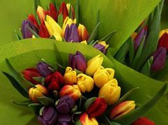 a rainbow of tulips (quietpurplehaze07) Tags: tulips red yellow green purple rainbow bunch bouquet explore wow