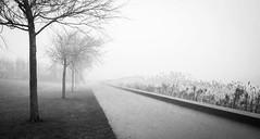 Not a single soul (MarxschisM) Tags: fog grey park outdoors trees treeline netherlands winter