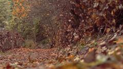 Todos los caminos lucen igual (J.J.Evan) Tags: road autumn trees leaves way hojas árboles colours camino path colores otoño sendero