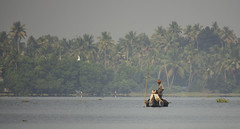 Boatmen (Sarah Burnage) Tags: trees seagulls india birds misty palms boat gulls kerala canoe pole palmtrees jungle turban tranquil backwater punt boatmen dugoutcanoe