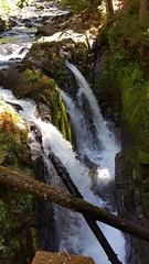 Sol Duc Falls - pretty anemic this year