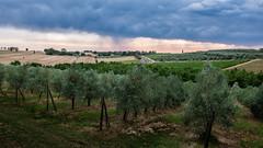Borgo Syrah (PascallacsaP) Tags: road blue trees sunset italy orange green yellow clouds contrast italia olive tuscany toscana heavy cortona rolling manzano arezzo borgosyrah