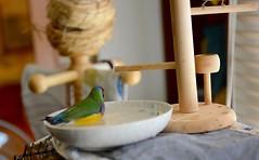 DSC_7833 (Jenny Yang) Tags: pet bird lady finch gouldian