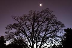 i love this tree (patri aragon) Tags: landscape ilovethistree patriciaaragonmartin