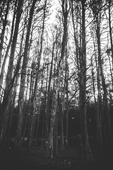 dark forest (Ruadh Sionnach) Tags: wood trees white black tree nature branco photography woods ar magic natureza gothic goth pb preto bosque e magical rvore livre paganism mystic pagan rvores mysticism