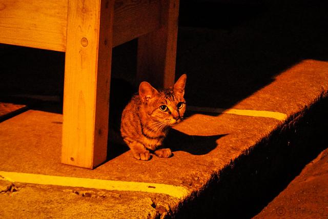 Today's Cat@2015-08-04