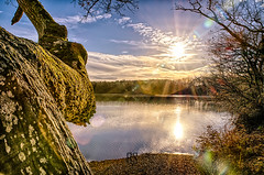 End of the Day (BS_Photographie) Tags: 1000 beauty beauté brenne campagne colors couleurs country countryside dri eau etang france hdr lac landscape natural nature parc park paysage pentax pond reserve soleil sun sunshine tree water waterscape arbre