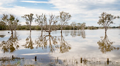 Longford Wetlands East Gippsland (laurie.g.w) Tags: longford wetlands east gippsland victoria swamp flooded trees sky reflections water cloud pano mirror wow