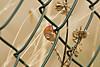 (Angela Schlafmütze) Tags: hoffnung speranza lumaca schnecke grashalm filoderba natura natur recinzioni einzäunung prato wiesen