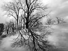 reflected trees and sky sm (theothermonalisa slowed down with the new) Tags: blackandwhitemendon trees sky reflection stormy lisacook rochester ny 2016 hank you b thank