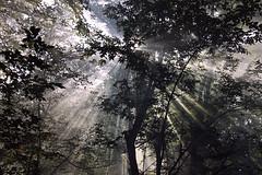 (Malykhanov) Tags: forest fog mist rays light crimea trip travel trees tree woods wood nature