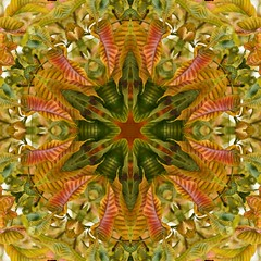 Kaleido Abstract 1577 (Lostash) Tags: art edited abstract patterns symmetry shapes kaleidoscopes