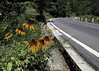Mountain Road (cowyeow) Tags: shennongjiaforestrydistrict composition asia asian china chinese shennongjia road landscape mountains hubei flower wildflower bloom sunflower sunflowers travel roadtrip