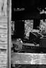 Artifacts (K.G.Hawes) Tags: meadowlarkbotanicalgardens architectural architecture botanicalgarden brokendown building buildings cinderblock cinderblocks garbage garden litter old rundown shack trash black white blackandwhite bw monochrome monochromatic