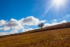Un rbol solitario (saparmo) Tags: seleccionar nubes rbol rastrojo cielo sol bokeh honrubia cuenca lamancha